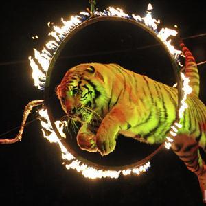 Цирки Алтыная